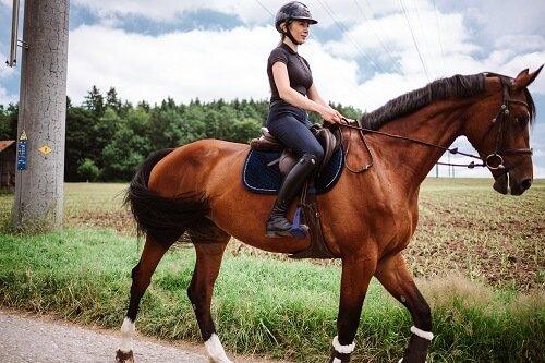Pferd-gymnastizieren-Gel-nde