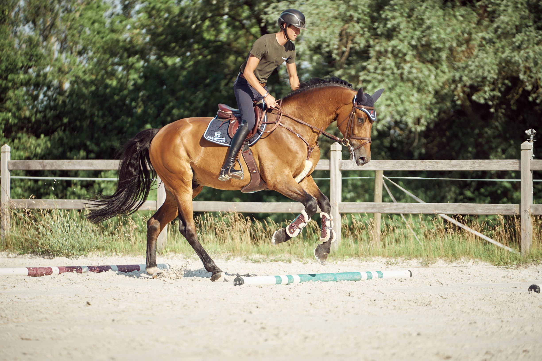 Stangenarbeit als Abwechslung für die Pferde mit Basile Bettendorf