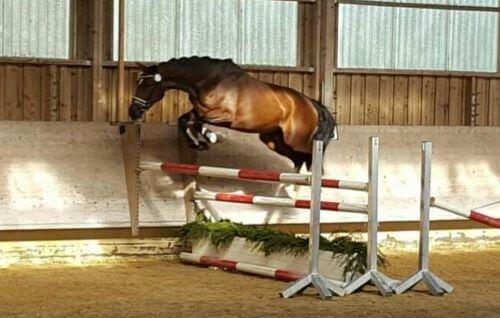 Pferd-beim-Freispringen