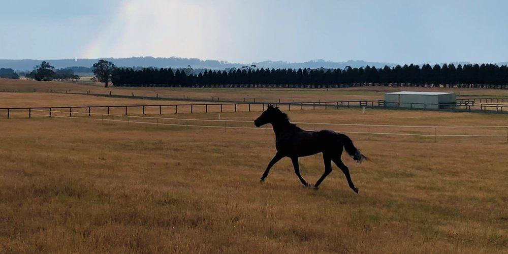 Andere Länder, andere Sitten - die Pferdewelt in Australien