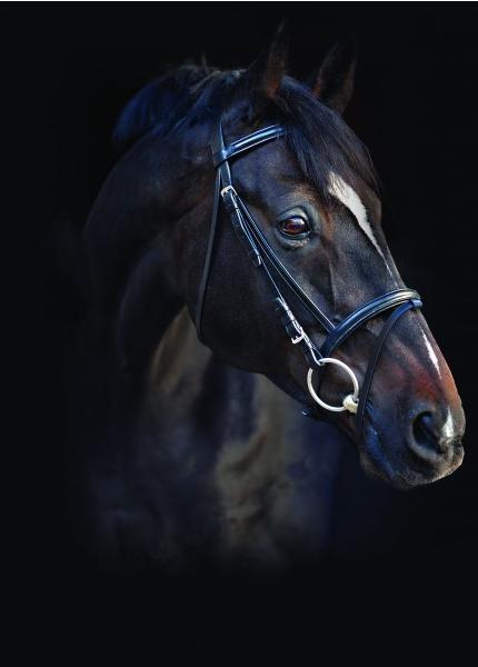 Horseware Amigo Trense Kombiniert